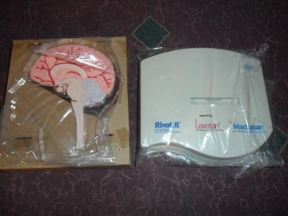 Modelo Anatómico Cerebro Humano Pharma Design Nuevo