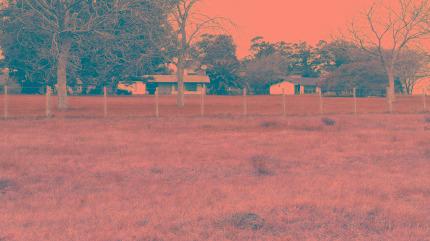 Campo Ganadero En Producción En General Madariaga (b446)