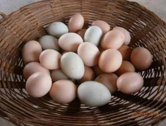 Ovos Galado De Galinha De Capoeira Valor Fixado Em 100 Ovoc