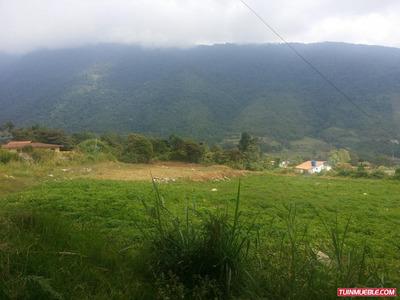 Terreno Via, El Valle Bosque Pino 10.000mt2. Merida