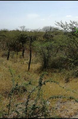 Lote 126 Mts2 7x18 En La Floresta