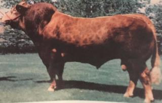 Semen Bovino - Limousin