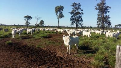 Fazenda A Venda Em Porto Murtinho - Ms (pecuária) - 822