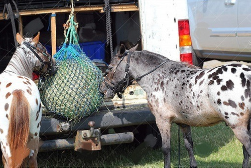 10 Redes De Feno Malha Pequena Para Caprinos Ovinos Equinos
