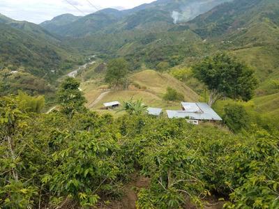 Venta De Finca, Vda Frazadas, Tulua Valle