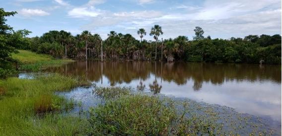 Fazenda Para Arrendamento De Soja Em Paraíso Do Tocantins - - 1156