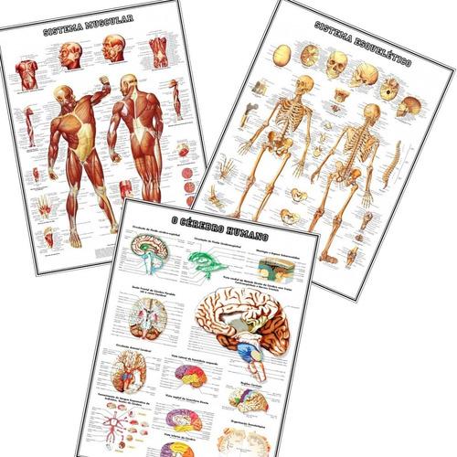 3 Posters 65x100cm Medicina --- Musculos Esqueleto + Cérebro