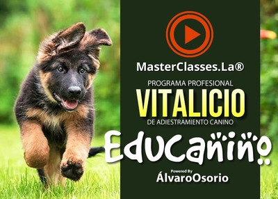 Programa Profesional De Adiestramiento Canino
