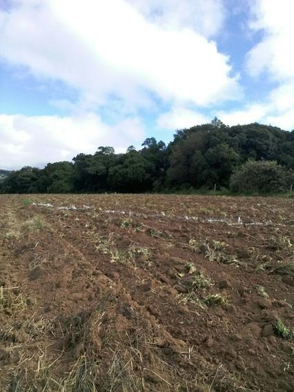 T01 Terrenos Proximo A Comercios Locais, R$ 25000 A Vista
