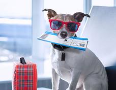 Tramite Senasa Viajar Con Mascota Perro Fuera Pais Exterior