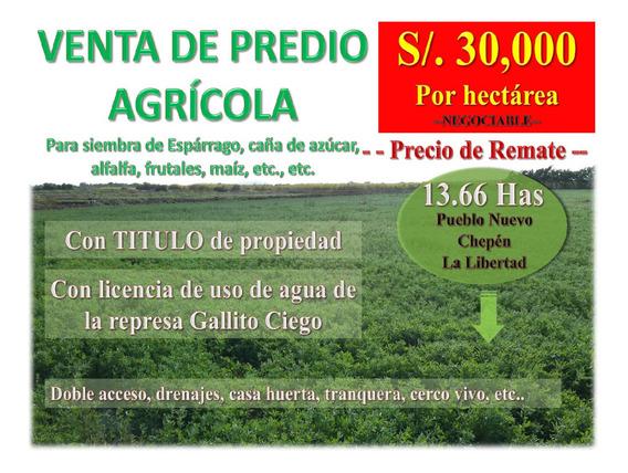 Predio Agrícola - Chepén La Libertad 13.66 Has - Negociable