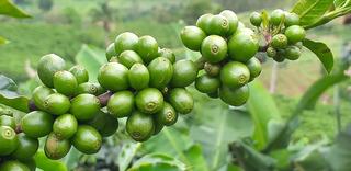 Fazenda, Para Venda Em Carangola/mg - Var1212ale