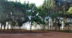 Fazenda Para Venda Em Nova Maringá, Fazenda Zona Rural Nova Maringa/mt R$ 130.000.000 - 31786