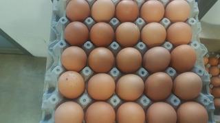 Caja Huevos Campo Gallina Feliz Por Mayor