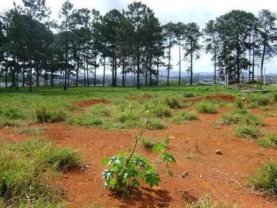 Terreno Em Parque Nossa Senhora Das Graças, Itaquaquecetuba/sp De 0m² À Venda Por R$ 6.300.000,00 - Te92731