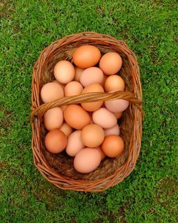 Huevos Gallinas Libres Al Mayor
