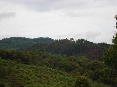 Fazenda Rural À Venda, Centro, Angelina. - Fa0003