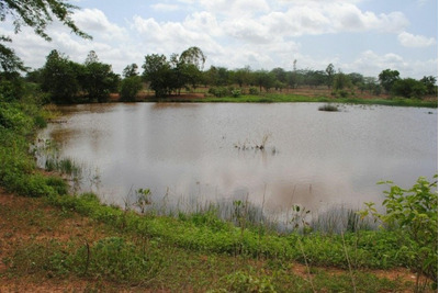 Fazenda A Venda No Canto Do Buriti -pi - 890