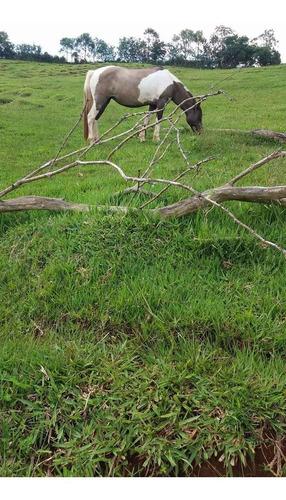 Vendo Égua Pampa Mansa De Charrete Carroça Sela Areio Arado