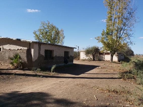 Finca 19 Has. Costa De Araujo, Mendoza Oportunidad