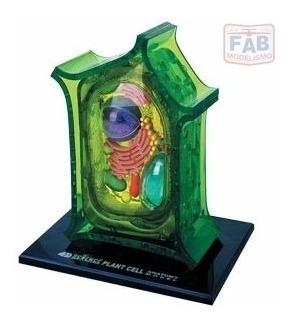 Modelo De Anatomia 4d Para Ensino Veterinário Celula Vegetal