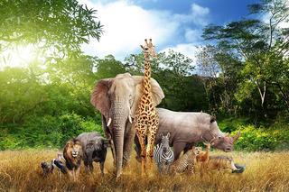 Painel De Festa Infantil Em Tecido Safari Na Savana 5,0x3,0m