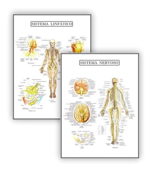Kit 2 Poster Educação Fisio Linfático Nervoso - Plastificado
