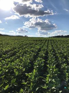 Fazenda Dupla Aptidão 5920 Hectares