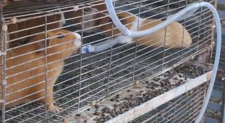 Bebedero Nipple Para Cuy Y Conejos Bebederos Niple Hamster