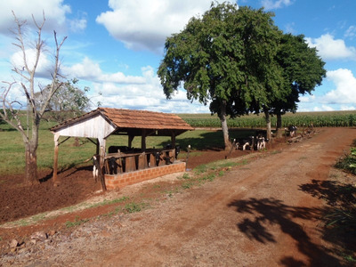Sitio Distrito Vila Celeste Santa Helena Pr Brasil - 129