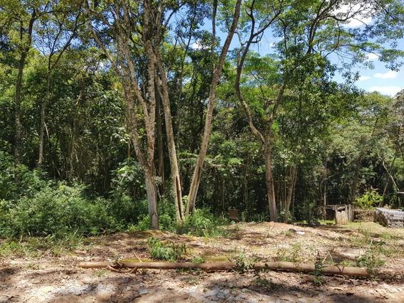 Terreno Para Venda 1400m² - Condomínio Bosque Do Embu - Centro De Embu Das Artes - 242 - 33581136