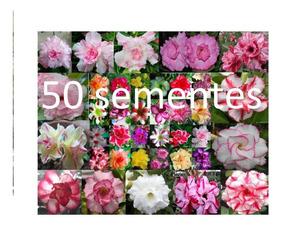 50 Sementes Rosa Do Deserto( + De 30 Cores Diferente )