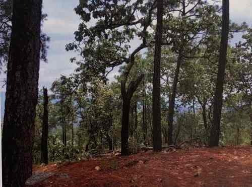 Terreno Rústico Maderable Venta Cuyutlán, Jal. $60,000,000 Ezetor E2