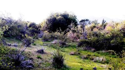 Vendo Parcelas De 5000 M2 En Los Canelos, Antuco $ 10.000.00