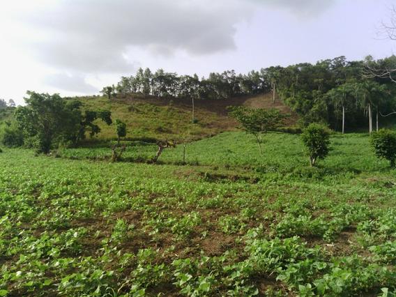 Finca De 183 Tareas Agrícola Y Invernaderos En Ocoa