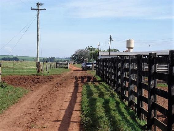 Fazenda A Venda No Bairro Taciba Em Presidente Prudente - - 281-1