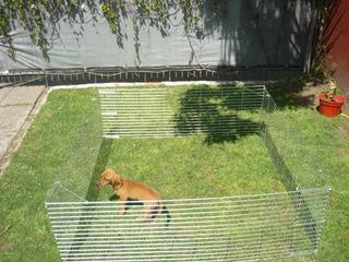 Corral Chico Para Conejos,cobayos Y Perros Chicos