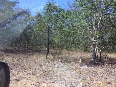 Fazenda A Venda Em São Braz Do Piauí - Pi - 577