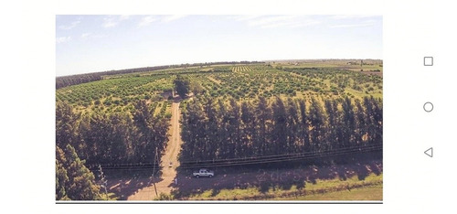 Espectacular Campo Con Plantaciones De Citrus