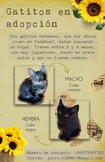 Gatitos Hermanos En Adopción (3 A 4 Meses)