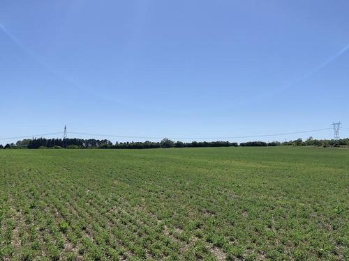 Excelente Campo En Canelones Sobre Ruta 5, 150 Has Agricolas.