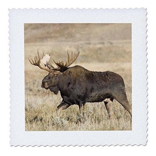 3drose Qs Wyoming Grand Teton Parque Nacional Bull M