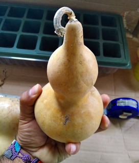 Bule O Guaje Natural Pequeño Entero Jicara Calabaza 15cm