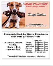 Caminador O Paseador Canino.