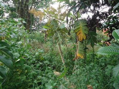 Terreno En Huauchinango