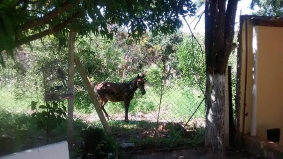 Chácara Com 2 Dormitórios À Venda, 1000 M² Por R$ 300.000 - Loteamento Chácaras Gargantilhas - Campinas/sp - Ch0442