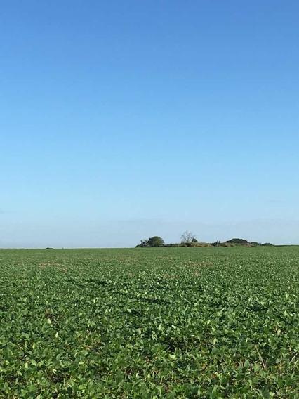 Fazenda 1.140 Hectares Dupla Aptidão Soja E Pecuária