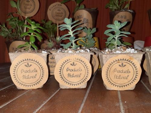 Imagen 1 de 10 de Plantas Tunas Suculentas Decoradas Ideales Regalo Souvenirs