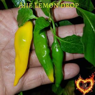 10 Semillas..lemon Droop