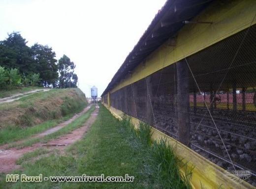 Vendo Sitio Em Itapetininga Com Barracão Granja (032)